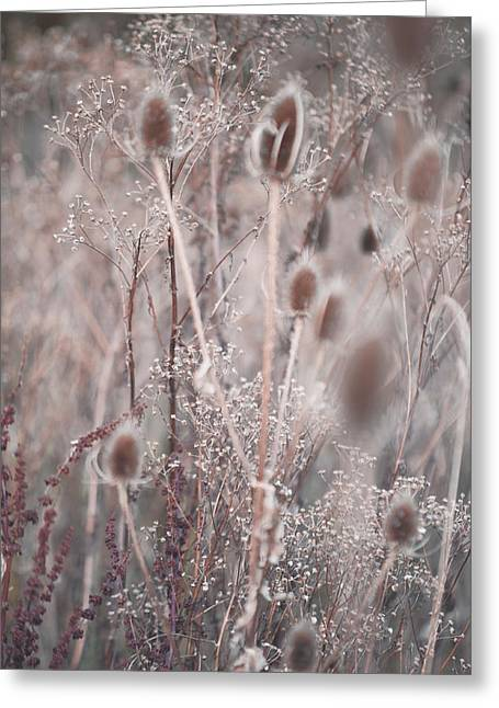 Silver Shades Of Wild Grass 2 Greeting Card by Jenny Rainbow