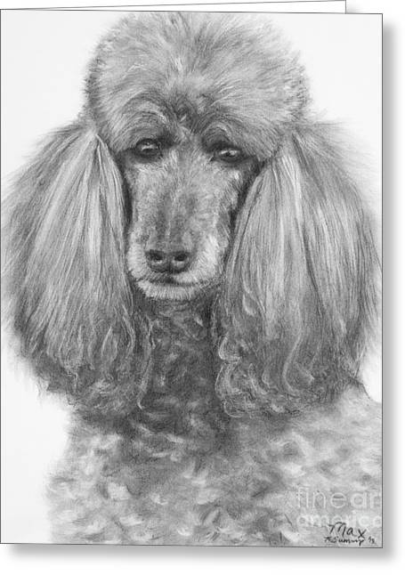 Silver Standard Poodle Drawing Greeting Card by Kate Sumners
