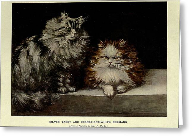 Silver Tabby And Orange And White Persians Greeting Card
