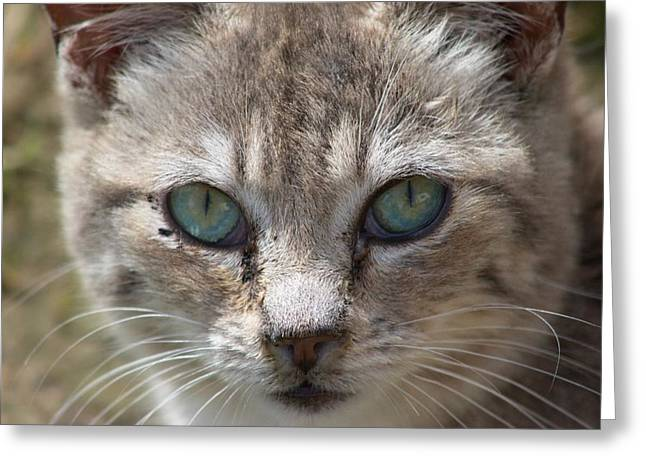 Silver Tabby But What Color Eyes Greeting Card