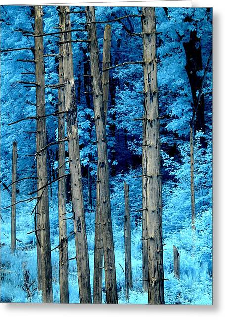 Silver Trees Greeting Card by Luke Moore