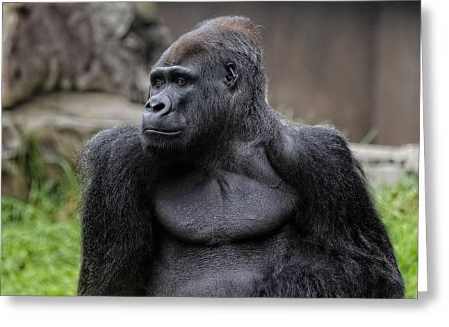 Silverback Gorilla Greeting Card by Scott Hill