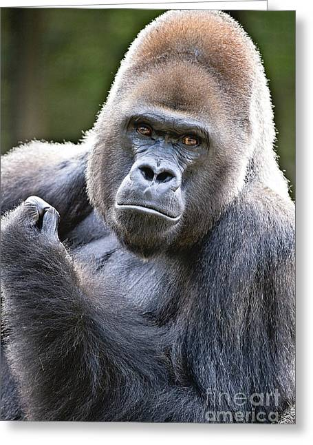 Silverback Greeting Card by Scott Pellegrin
