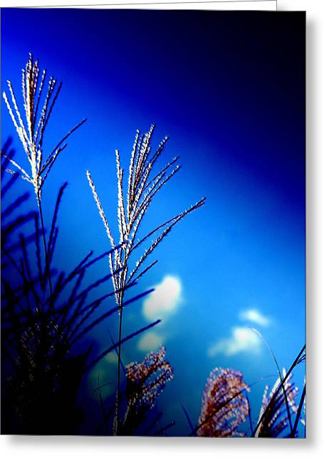 Simple Beauty  Greeting Card by Walter  Holland