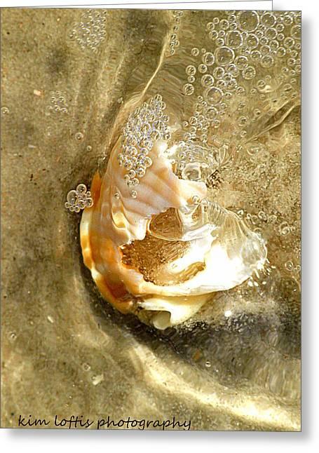 simple Shell  Greeting Card by Kim Loftis