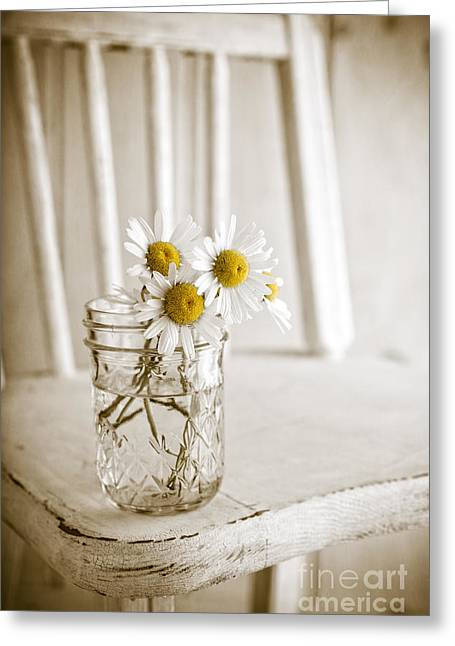 Simple White Daisy Flowers Greeting Card by Edward Fielding