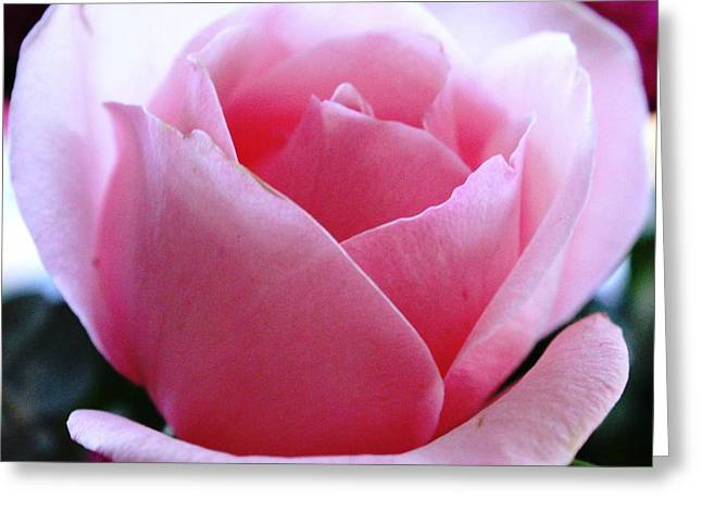 Greeting Card featuring the photograph Simplicity And Grace by Judy Palkimas