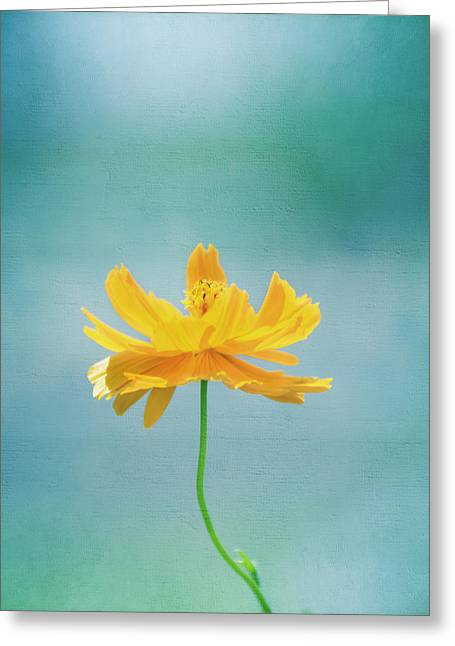 Simplicity Greeting Card by Kim Hojnacki
