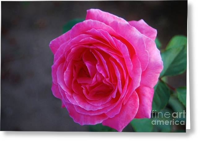 Simply A Rose Greeting Card by Angela J Wright