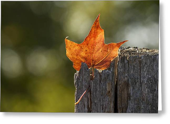 Simply Autumn Greeting Card by Penny Meyers