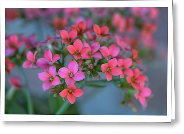 Simply Kalanchoe Greeting Card by Penni D'Aulerio