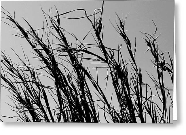 Greeting Card featuring the photograph Simply Straw by Candice Trimble