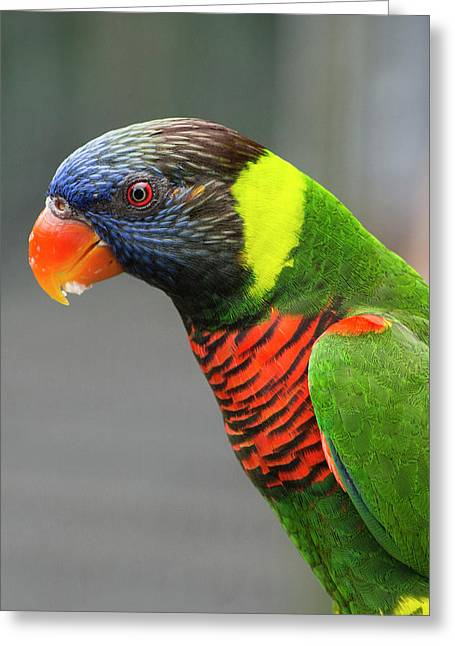 Singapore, Jurong Bird Park Greeting Card by Cindy Miller Hopkins