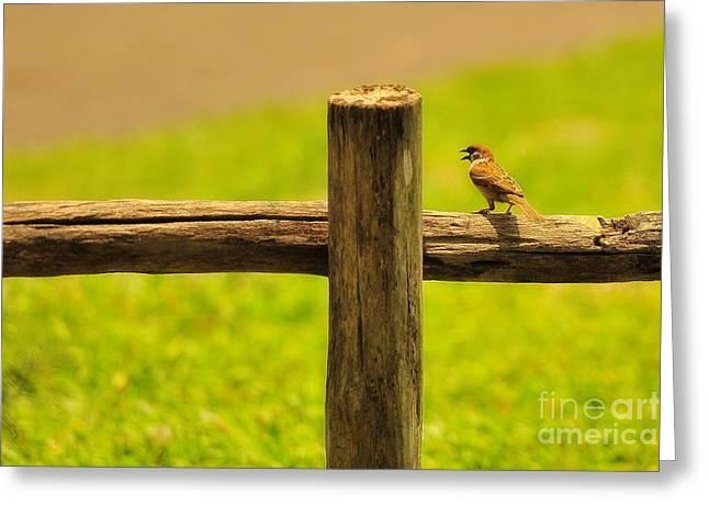 Singing Bird Greeting Card by George Paris