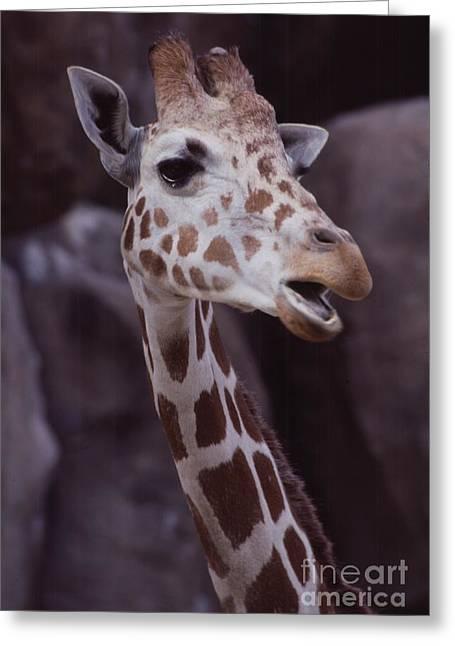 Singing Giraffe Greeting Card by Anna Lisa Yoder