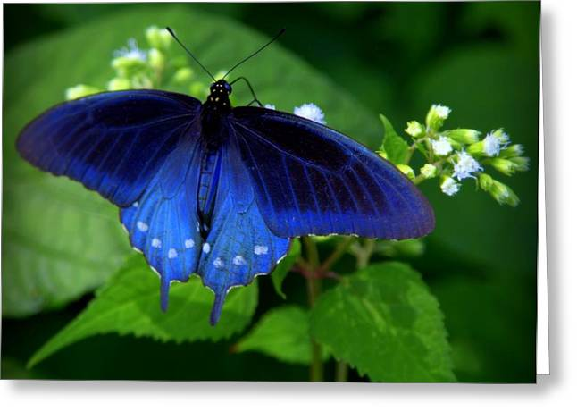 Singing The Blues Greeting Card by Karen Wiles