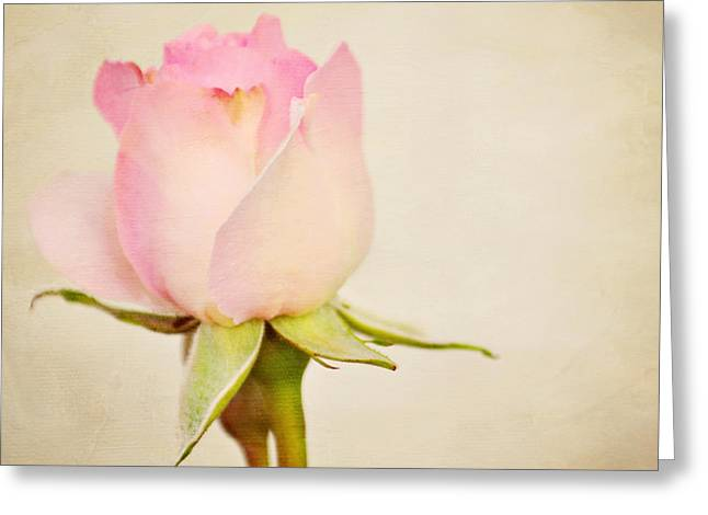 Single Baby Pink Rose Greeting Card