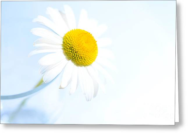 Single Daisy Flower In Vase Greeting Card by Sabine Jacobs