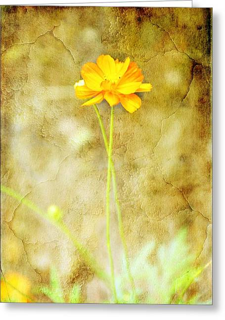 Single Greeting Card by Jan Amiss Photography
