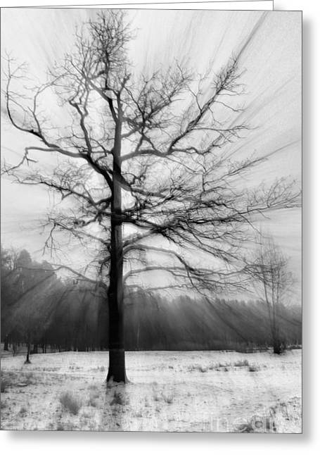 Single Leafless Tree In Winter Forest Greeting Card