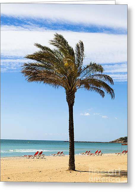Single Palm Tree On Beach With Unoccupied Sun Loungers Greeting Card
