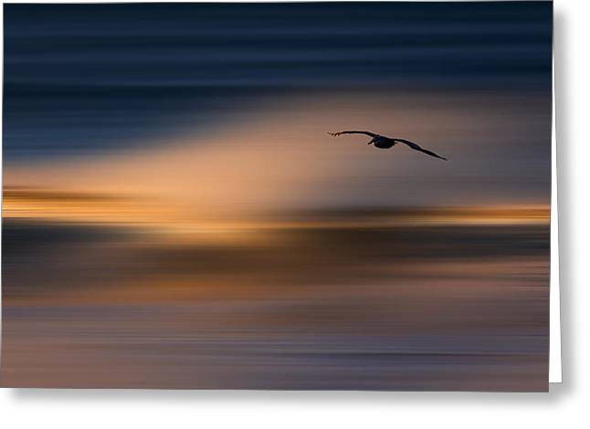 Greeting Card featuring the photograph Single Pelican  73a1102 by David Orias
