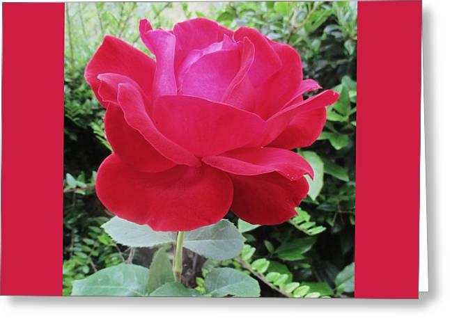 Single Red Rose Greeting Card by Kathy Spall