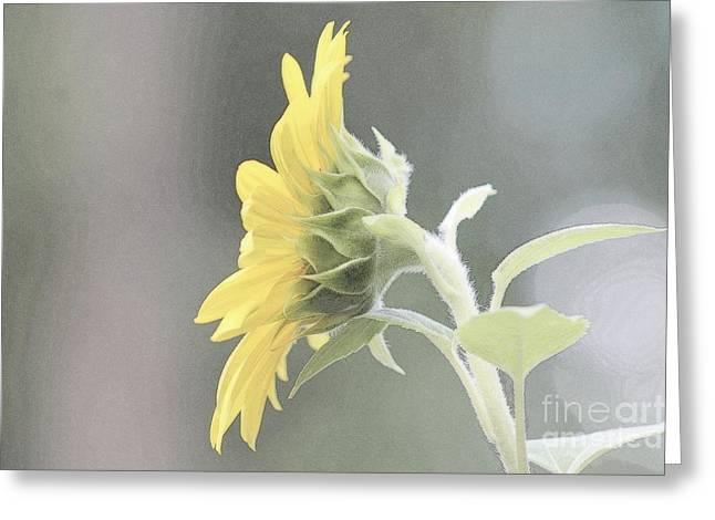 Single Sunflower Greeting Card by Leone Lund