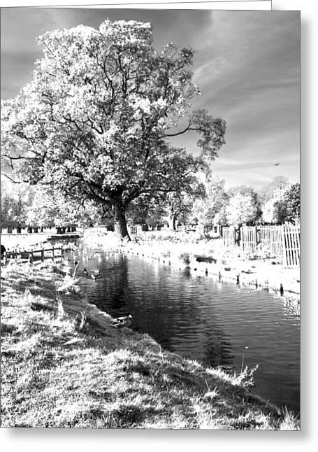 Single Tree Aginst The Sun Greeting Card by Maj Seda