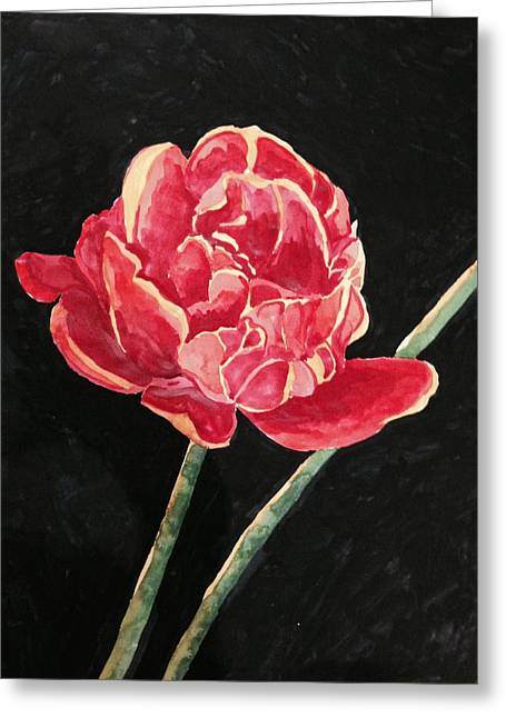 Single Tulip On Black Background Greeting Card