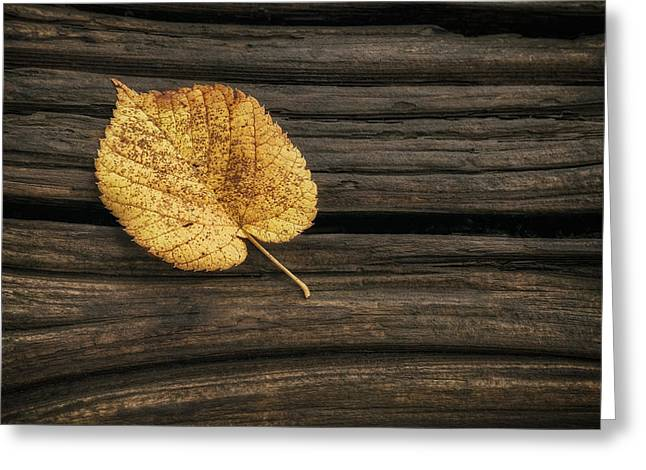 Single Yellow Birch Leaf Greeting Card