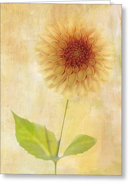 Single Yellow Dahlia Greeting Card
