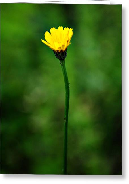 Single Yellow Flower Greeting Card by Stephanie Grooms