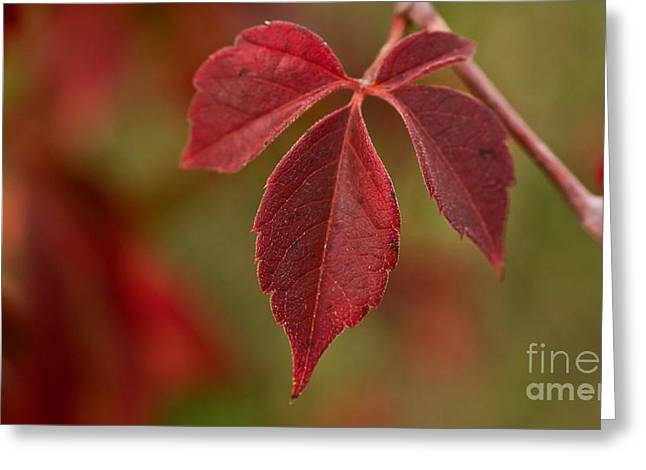 Greeting Card featuring the photograph Singular Fall Perfection by Julie Clements