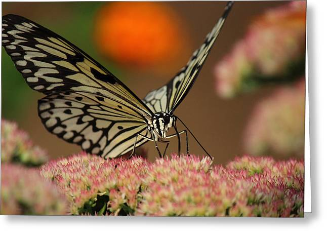 Sip Of The Nectar Greeting Card by Randy Hall