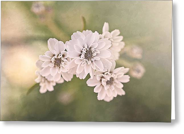 Sisters Greeting Card by Faith Simbeck