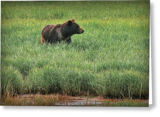 Sitka Grizzly Greeting Card