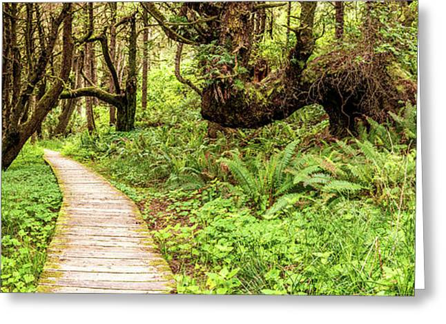 Sitka Spruce Trees And Boardwalk Greeting Card