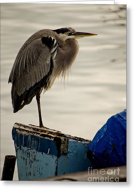 Sittin' On The Dock Of The Bay Greeting Card by Donna Greene
