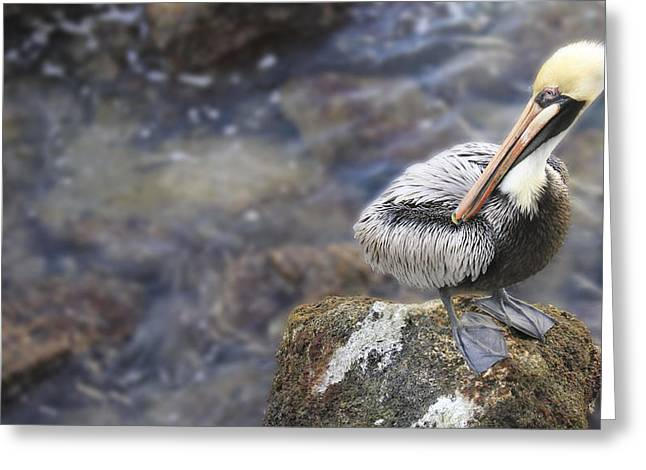 Sitting On A Rock In The Bay Greeting Card