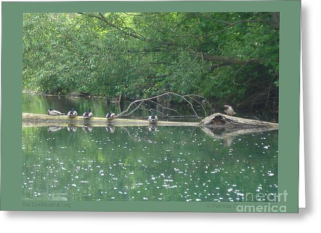 Six Ducks On A Log Greeting Card by Patricia Overmoyer
