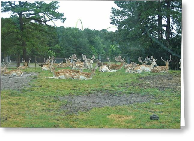 Six Flags Great Adventure - Animal Park - 121216 Greeting Card by DC Photographer
