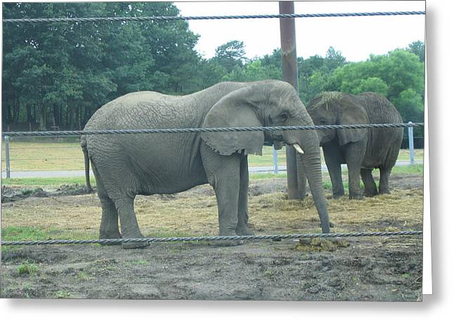 Six Flags Great Adventure - Animal Park - 121222 Greeting Card