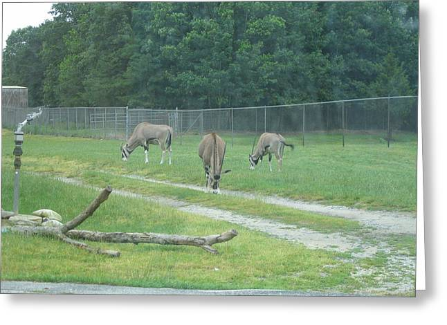 Six Flags Great Adventure - Animal Park - 121231 Greeting Card by DC Photographer