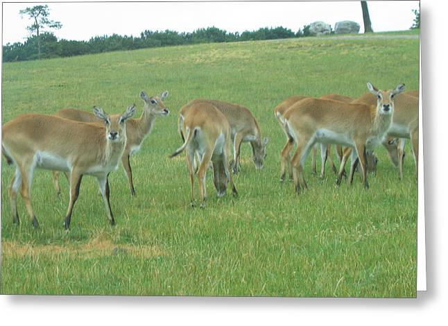 Six Flags Great Adventure - Animal Park - 121242 Greeting Card by DC Photographer