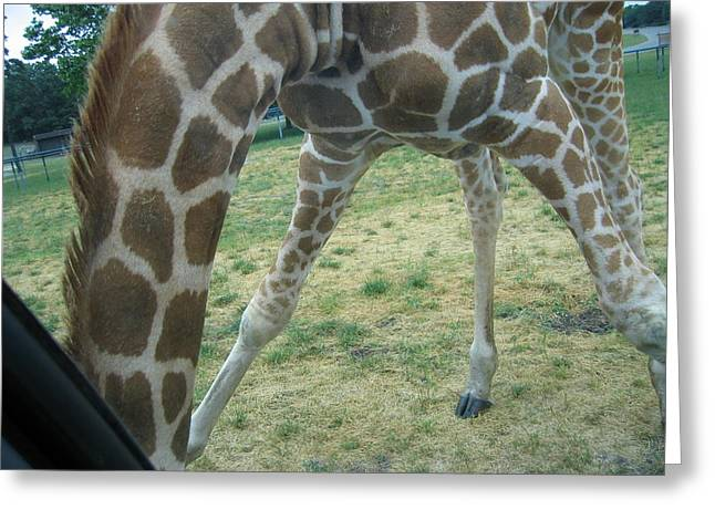 Six Flags Great Adventure - Animal Park - 121245 Greeting Card