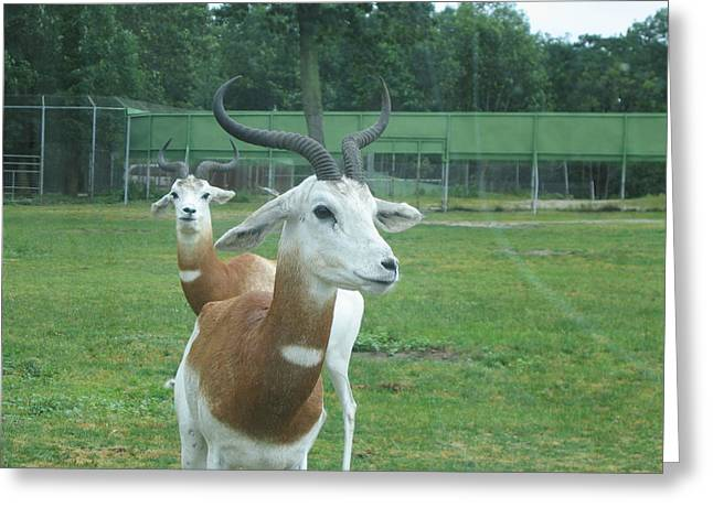 Six Flags Great Adventure - Animal Park - 121250 Greeting Card by DC Photographer