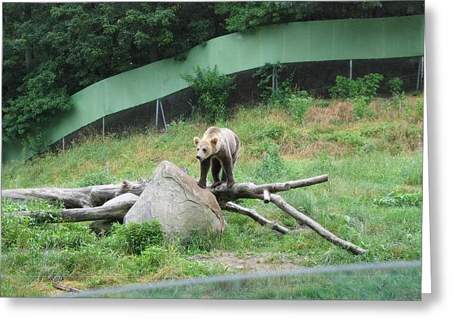 Six Flags Great Adventure - Animal Park - 121265 Greeting Card by DC Photographer