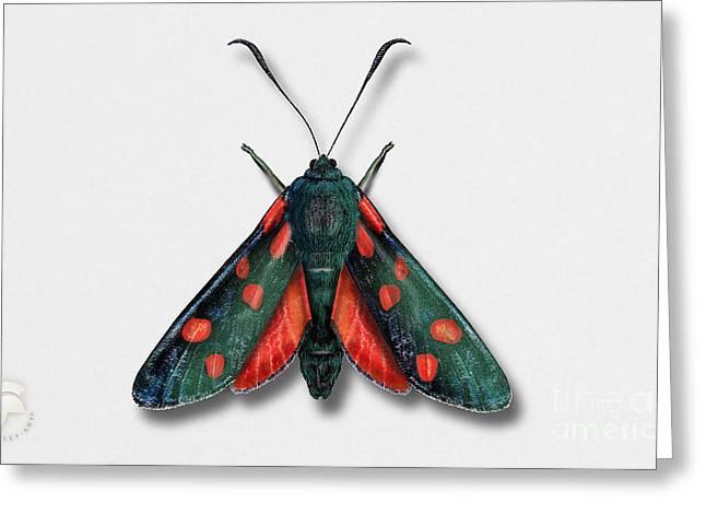 Six Spot Burnet Butterfly - Zygaena Filipendulae Naturalistic Painting - Nettersheim Eifel Greeting Card by Urft Valley Art
