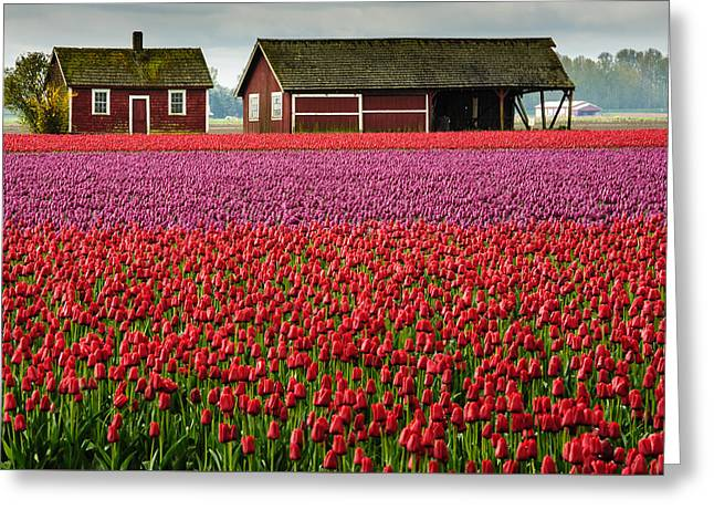 Skagit Valley Crops Greeting Card